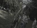 Дерево желаний (Темное оформление)