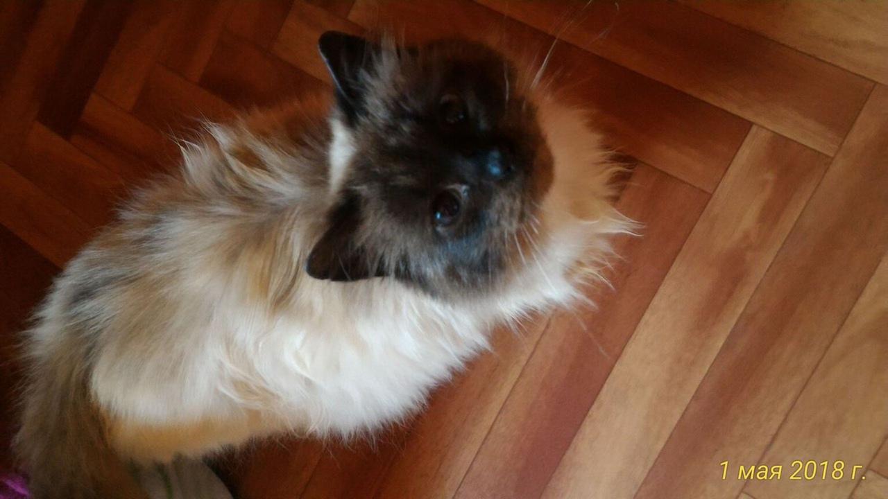 #нужна_финансовая_помощь@vmestepnz_animals #Виолетта_ID64 Н