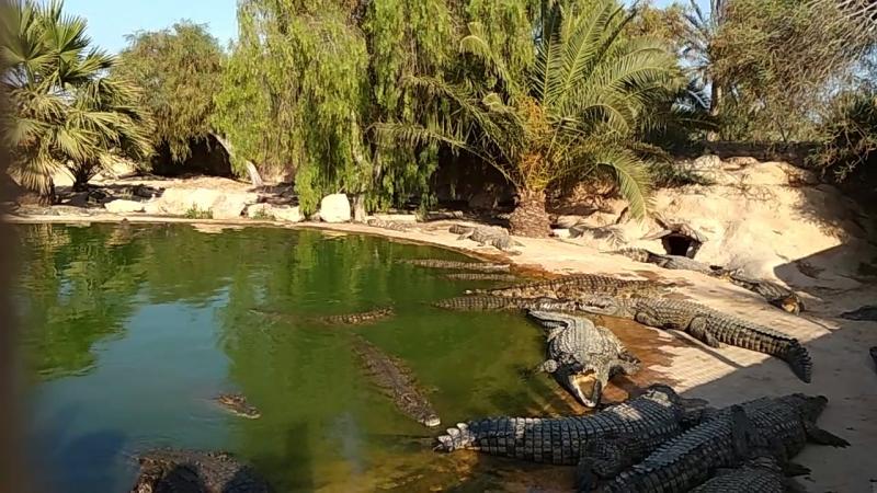Крокодиловая ферма остров Джерба 2018