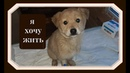 Щенки из тербунского ада Спасение от смерти Puppies are from Terbuny's hell Salvation from death