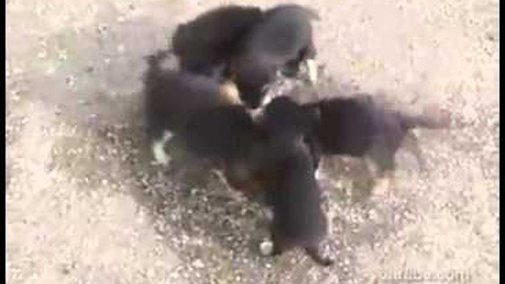 Щенки атакуют кошек Улыбнись