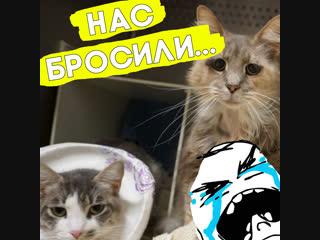Почему этих котиков отдали в приют?