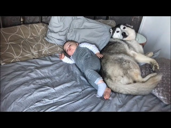 My Baby Dog didn't want to wake up!!