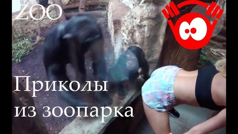 Приколы из Зоопарка. Лучшие приколы с животными / Fun from the ZOO