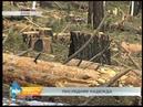 Пилотный для России проект по чипированию леса даёт первые результаты в Иркутской области