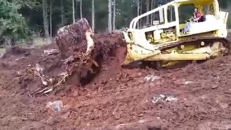 Bulldozer vs Tree Stump Fastest Stump Removal Heavy Equipment Machines