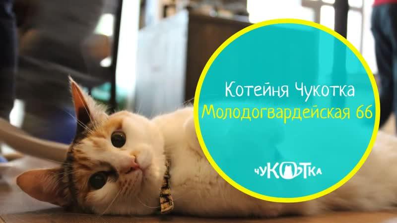 Котейня Чукотка