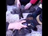 Пожарные спасли котов с того света