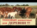 ТОП-3 ЖИВОТНЫХ для ДЕРЕВНИ! 12 Коров,17 Коз, 115 Цыплят