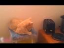 Приколы с котами и кошками для поднятия настроения 5