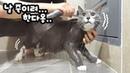 Моют котю