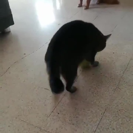 Push the cat