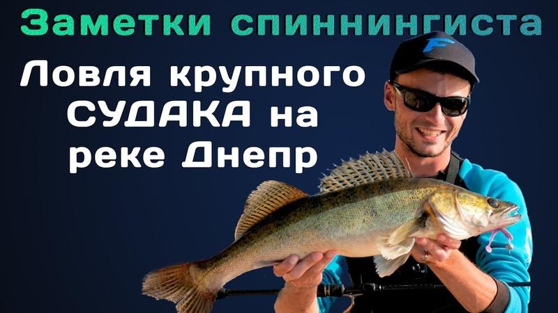 Поймал крупного судака на Днепре! Спиннинговая рыбалка с берега!