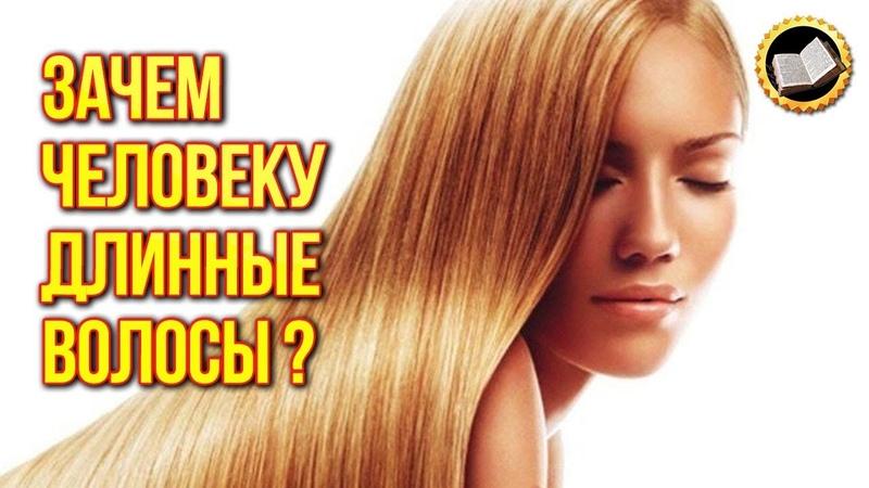 ЗАЧЕМ ЧЕЛОВЕКУ ДЛИННЫЕ ВОЛОСЫ Тайна Длинных Волос Информация о волосах