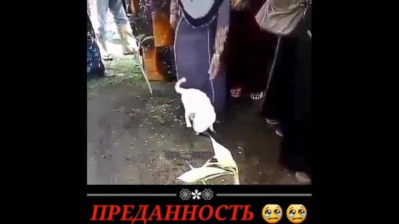 Салман Баркаев-3.mp4