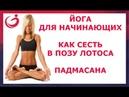 Йога для начинающих. Как сесть в Позу Лотоса. Падмасана.