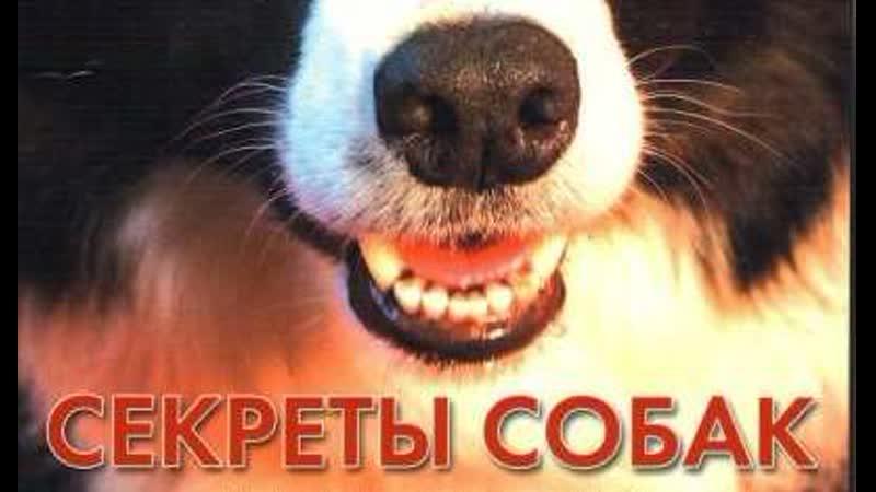 BBC Тайная жизнь собак 2010 Секреты собак