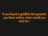 'The Goldfish' project