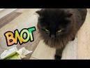 ВЛОГ: Кот достал! О кошачьем корме. Разбираю шкафы и мн. др.