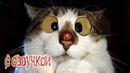 Приколы с котами - СМЕШНАЯ ОЗВУЧКА ЖИВОТНЫХ – ПОПРОБУЙ НЕ ЗАСМЕЯТЬСЯ 2018 - DOMI SHOW