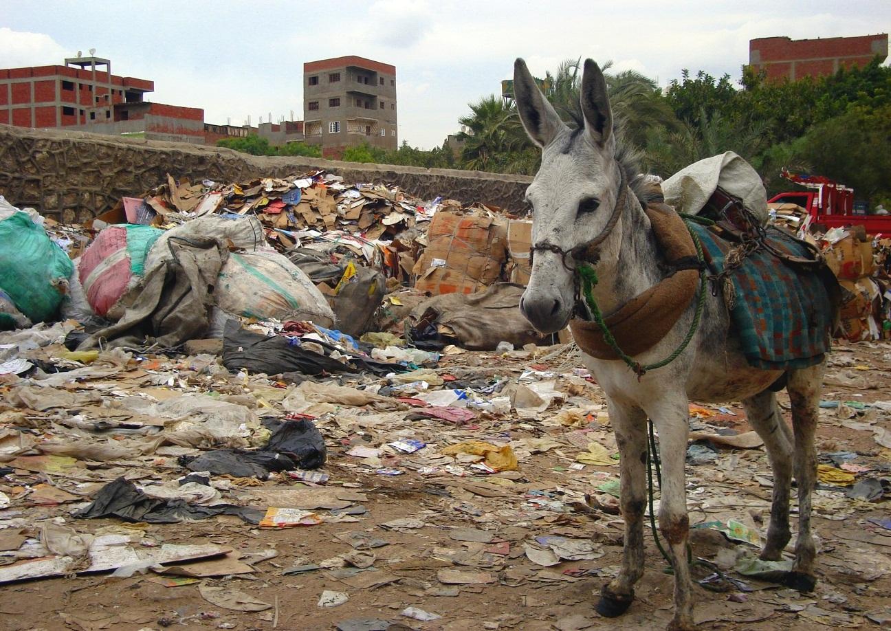 Осёл в городе мусорщиков