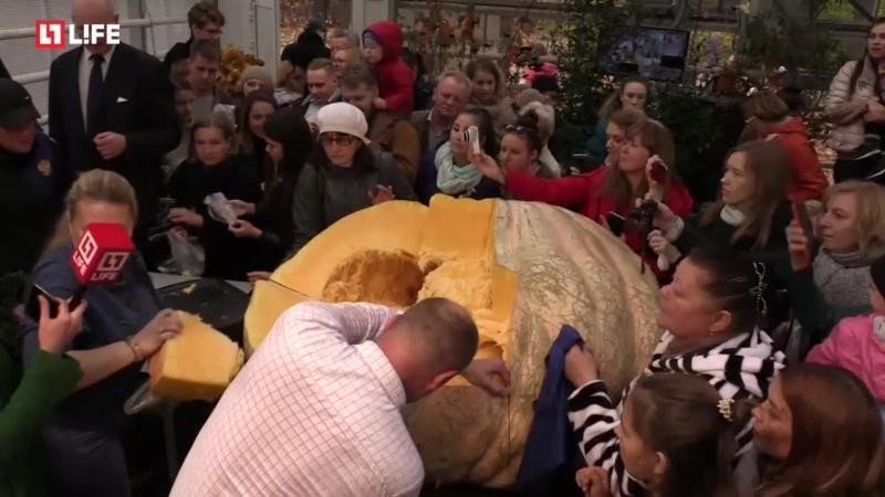 Режут самую большую тыкву в России
