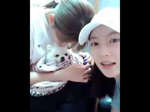 Jeongyeon, Seungyeon Nayeon with Bbosong at the Vet Hospital