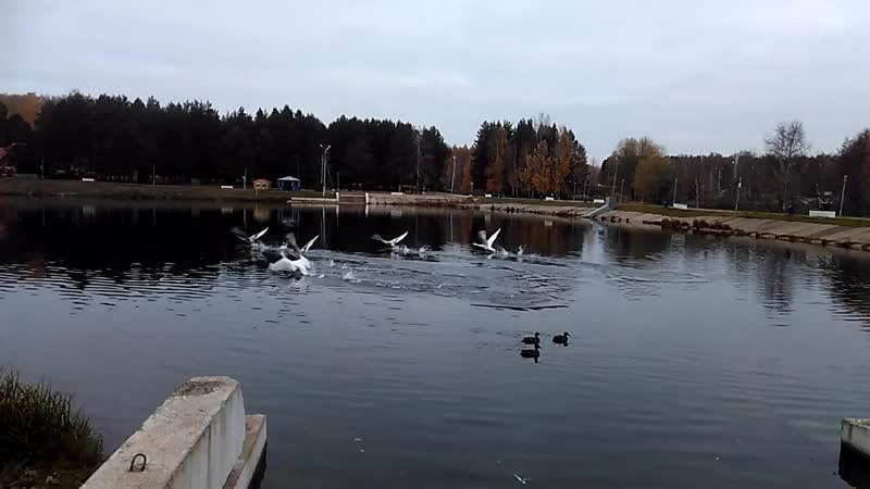 На Белебеевском пруду
