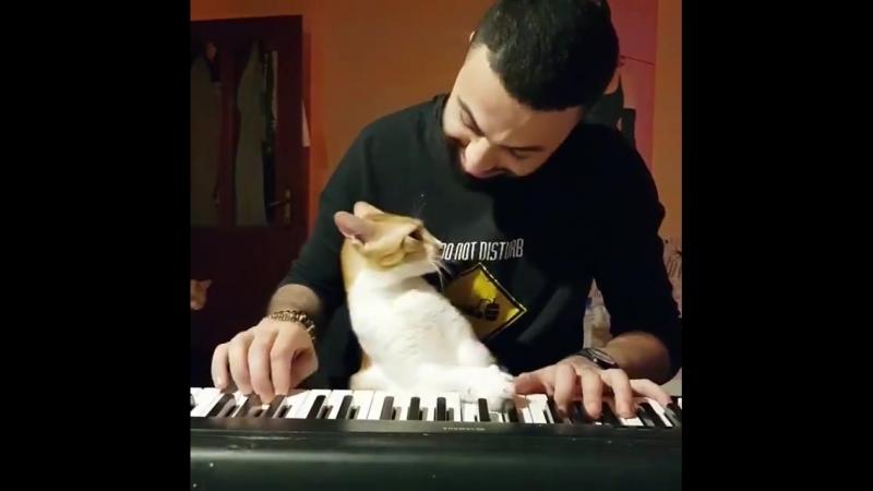 Что будет, если наиграть мелодию в присутствии кота