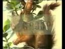 Грузинский алфавит с видеоиллюстрациями 3 deda ena 3