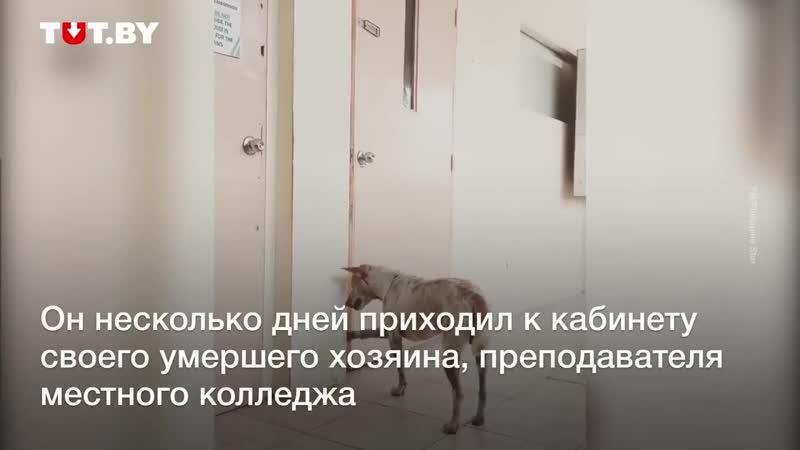 Хранители верности vk.comdoggii