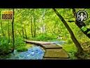 Шум леса, пение птиц и звуки текущего ручья 3 часа для расслабления и сна