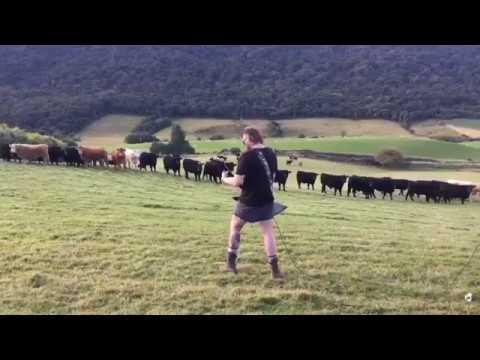 A Herd of Cows React to Doom Metal Riffs