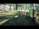 Время обеда. Рысь европейская в Лесном зоопарке