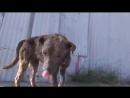 Бездомная собака дождалась помощи добрых людей.