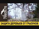 🍂 Как защитить плодовые деревья от мышей готовим сад к зиме 7 дач
