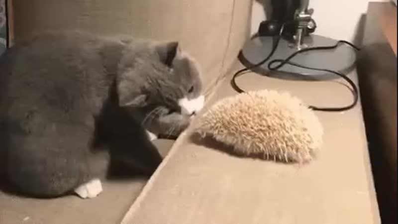 Кот и еж.mp4