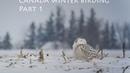 Canada winter birding Part 1