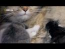 Дикая сторона кошек