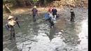 Trong Cái Ao Tù Này Kích Điện Bắt Được Toàn Cá Khủng Qúa Đã Luôn
