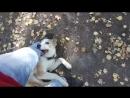 Счастливый пёс Каспер