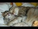 Кошки видео смешные Самые смешные приколы про кошек 2018 27 Самое веселое Без монтажа