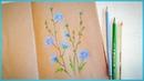Рисуем цветными карандашами цикорий Запись трансляции 09 07 18