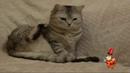 Приколы про котов.Смешные домашние животные.Кошка отдает честь мышонку