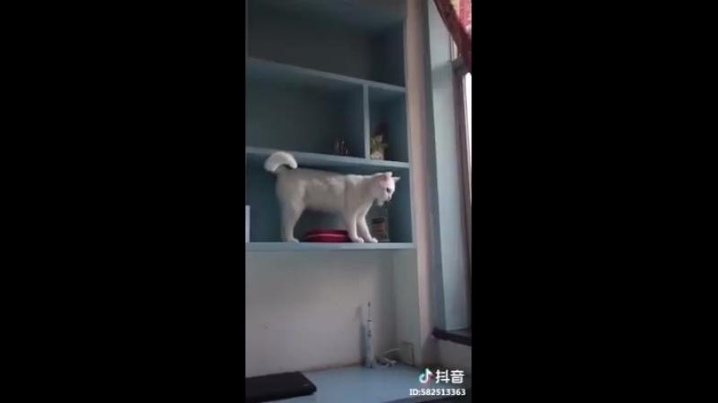 Кошка сбрасывает предметы с полок