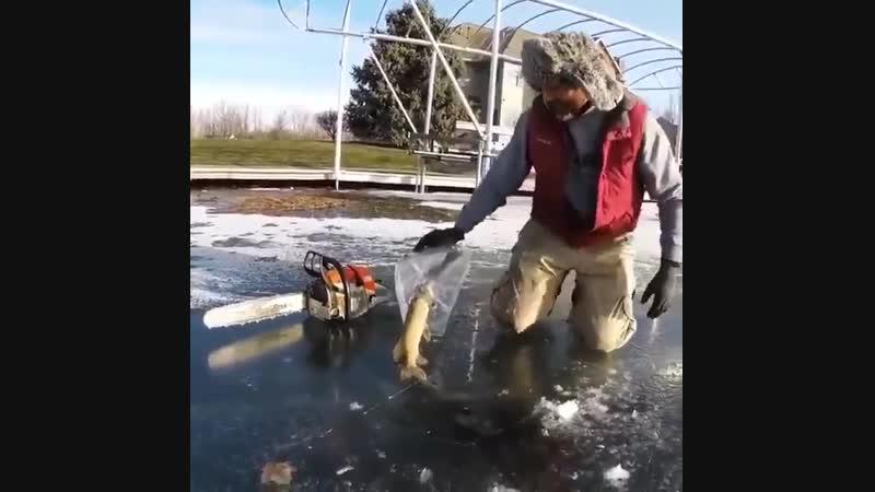 Необычная находка во льду