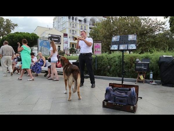 В Ялте вместе выступают собака и трубач