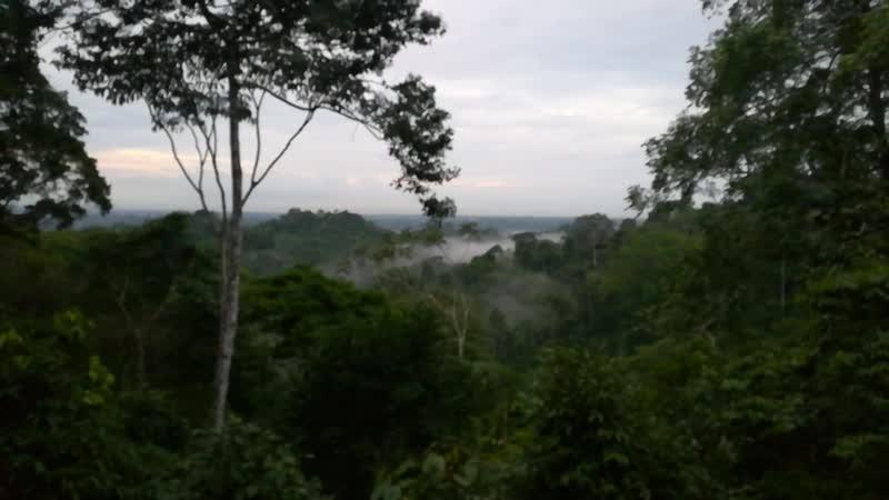 Утро над Амазонией