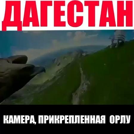 """НОВОСТИ➡️ДАГЕСТАН➡️МАХАЧКАЛА on Instagram: """"Камера, прикрепленная к орлу Дагестан ... И готов, как в детстве, я часами Там, где выси гор всегда бе..."""