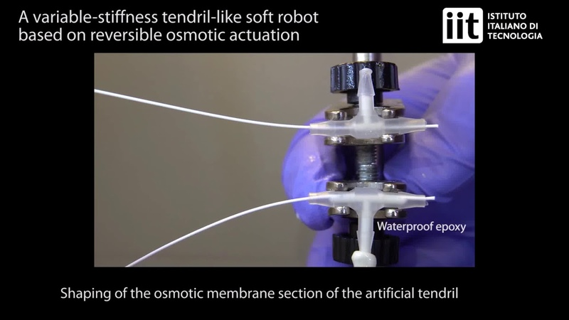 A variable-stiffness tendril-like soft robot based on reversible osmotic actuation